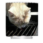 Grill Grate Gato Shower Curtain