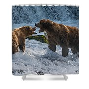 Grizzlies Fighting Shower Curtain