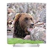 Grizzly Bear 02 Postcard Shower Curtain
