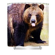 Grizzly Bear 1 Shower Curtain