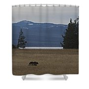 Grizzly Bear  #5270 Shower Curtain