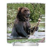 Grizzly Bear 6 Shower Curtain