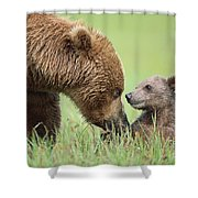 Grizzly Bear And Cub In Katmai Shower Curtain