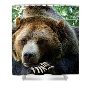 Grizzly Bear At Rest In Colorado Wildneress Shower Curtain