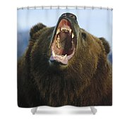 Grizzly Bear Close Up Of Growling Face Shower Curtain