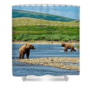 Grizzly Bear Communication In The Moraine River In Katmai  Np-ak Shower Curtain
