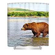 Grizzly Bear Determined To Catch A Salmon This Time In The Moraine River  Shower Curtain