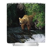Grizzly Bear Fishing Brooks River Falls Shower Curtain