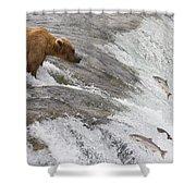 Grizzly Bear Fishing For Sockeye Salmon Shower Curtain