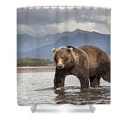 Grizzly Bear In River Katmai Np Alaska Shower Curtain
