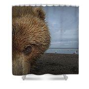 Grizzly Bear In Tidal Flats Alaska Shower Curtain
