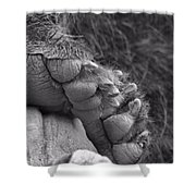 Grizzly Bear Paw Black And White Shower Curtain