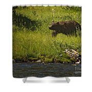 Grizzly Bear-signed-#1158 Shower Curtain