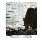 Grizzly Bear-signed-#4137 Shower Curtain
