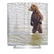 Grizzly Bear Standing To Get A Better Look In The Moraine River In Katmai Shower Curtain