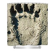 Grizzly Bear Track In Soft Mud. Shower Curtain