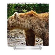 Grizzly Bear Very Close In Moraine River In Katmai National Preserve-ak Shower Curtain