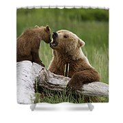 Grizzly Bear With Cub Playing Shower Curtain