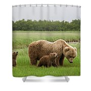 Grizzly Bear With Spring Cubs Shower Curtain