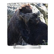 Grizzly Bears Fighting Shower Curtain
