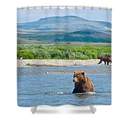 Grizzly Bears In Moraine River In Katmai National Preserve-ak Shower Curtain