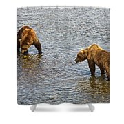Grizzly Bears Looking For Salmon In Moraine River In Katmai Np-ak Shower Curtain