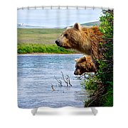 Grizzly Bears Peering Out Over Moraine River From Their Safe Island Shower Curtain