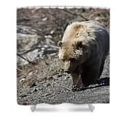 Grizzly By The Road Shower Curtain