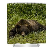 Grizzly Cub  #0863 Shower Curtain