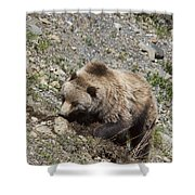 Grizzly Digging Shower Curtain