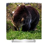 Grizzly Grazing Shower Curtain