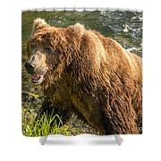 Grizzly On The River Bank Shower Curtain