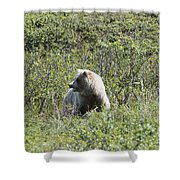Grizzly One Shower Curtain