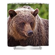 Grizzly Portrait Shower Curtain