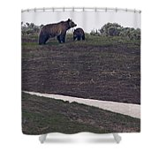Grizzly Sow And 2nd Year Cub  #3241 Shower Curtain