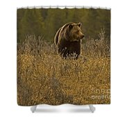 Grizzly Sow And Cub   #6365 Shower Curtain