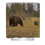 Grizzly Sow And Cub  #6382 Shower Curtain