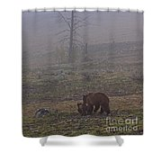 Grizzly Sow And Twins  #5817 Shower Curtain