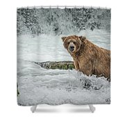 Grizzly Stare Shower Curtain