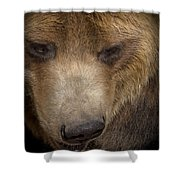 Grizzly Upclose Shower Curtain