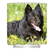 Groenendael Dog Shower Curtain