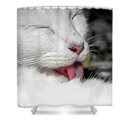 Grooming Cat Shower Curtain