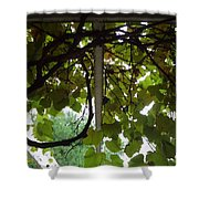 Gropius Vine Shower Curtain