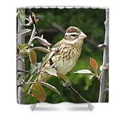 Grosbeak Shower Curtain