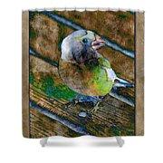 Grosbeak Shower Curtain