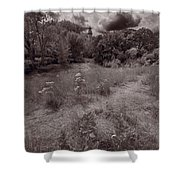 Gross Point Beach Grasses Bw Shower Curtain