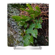 Ground Cover Shower Curtain