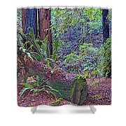 Ground Level Landscape In Armstrong Redwoods State Preserve Near Guerneville-ca Shower Curtain