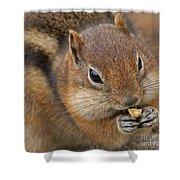 Ground Squirrel Shower Curtain