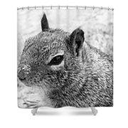 Ground Squirrel With Sandy Nose Shower Curtain